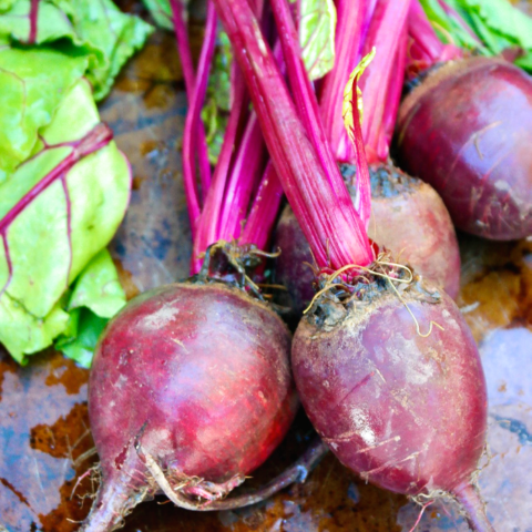 Fresh beets with green tops just washed and ready to cook.